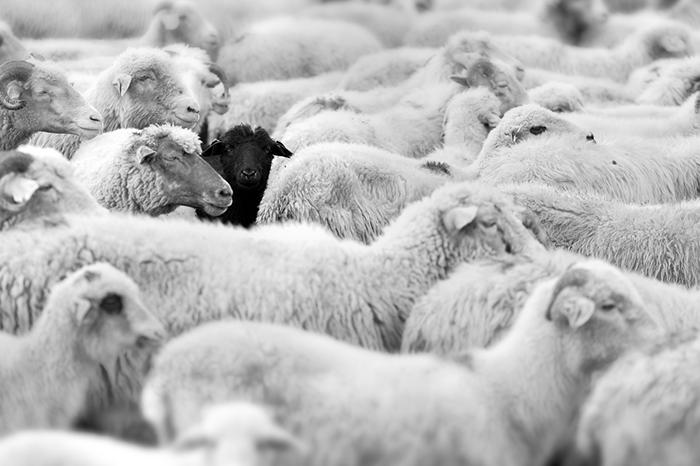 Manual de comportamento social paravegetarianos